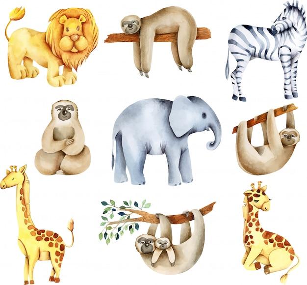 Kolekcja Akwareli Egzotycznych Zwierząt Afrykańskich (lew, Słoń, Lenistwo, żyrafy, Zebra) Premium Wektorów