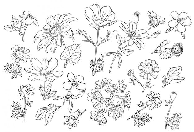 Kolekcja Dzikich Kwiatów Darmowych Wektorów