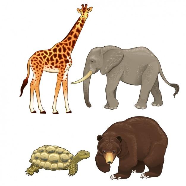 Kolekcja Dzikie Zwierzęta Darmowych Wektorów