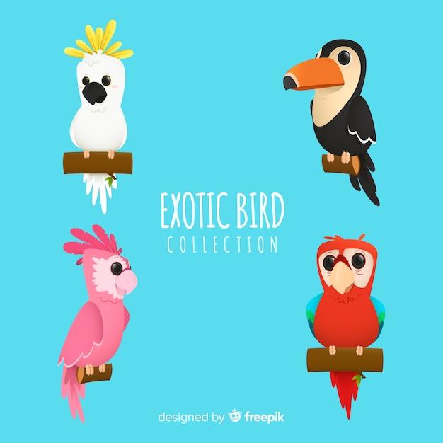 Kolekcja Egzotycznych Ptaków Darmowych Wektorów