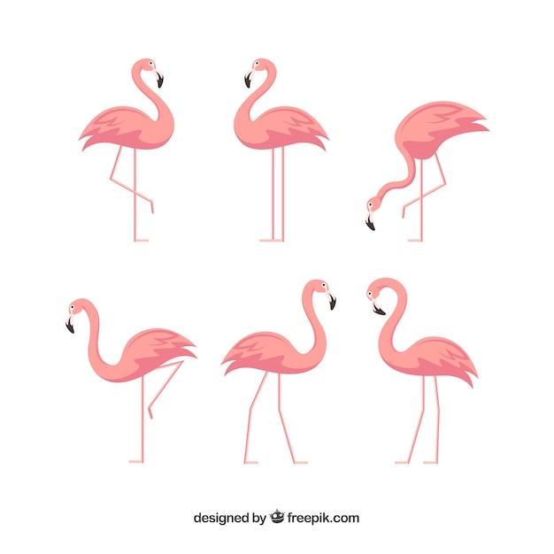 Kolekcja Flamingów O Różnych Pozycjach W Stylu Płaskiej Darmowych Wektorów