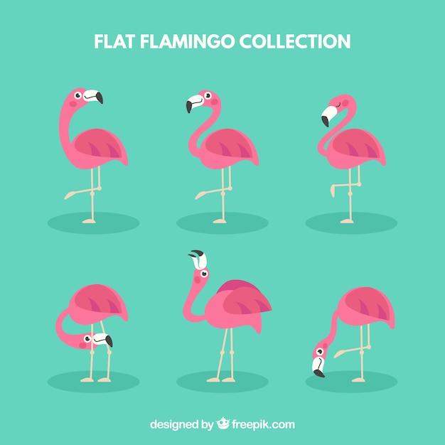 Kolekcja flamingów z różnymi pozami Darmowych Wektorów