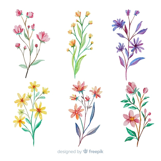 Kolekcja kolorowych akwarela gałąź kwiatowy Darmowych Wektorów