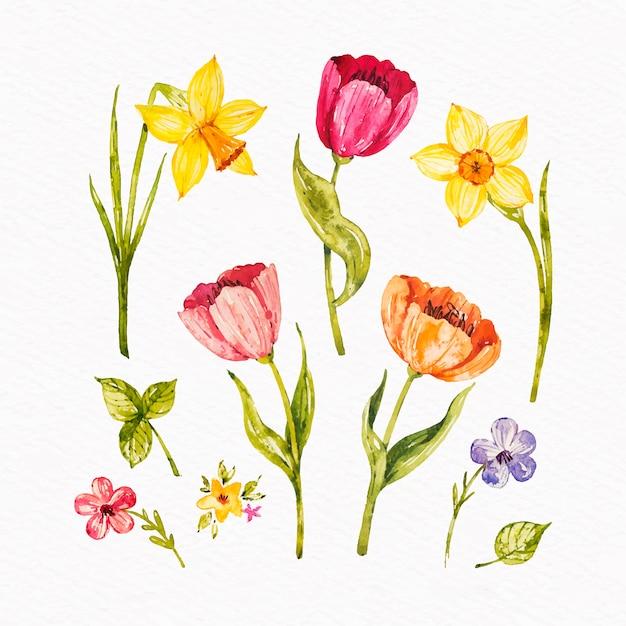 Kolekcja Kolorowych Kwiatów Wiosna Akwarela Darmowych Wektorów