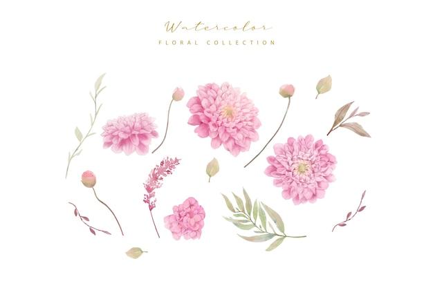 Kolekcja Kwiatów Dalii Akwarela Darmowych Wektorów