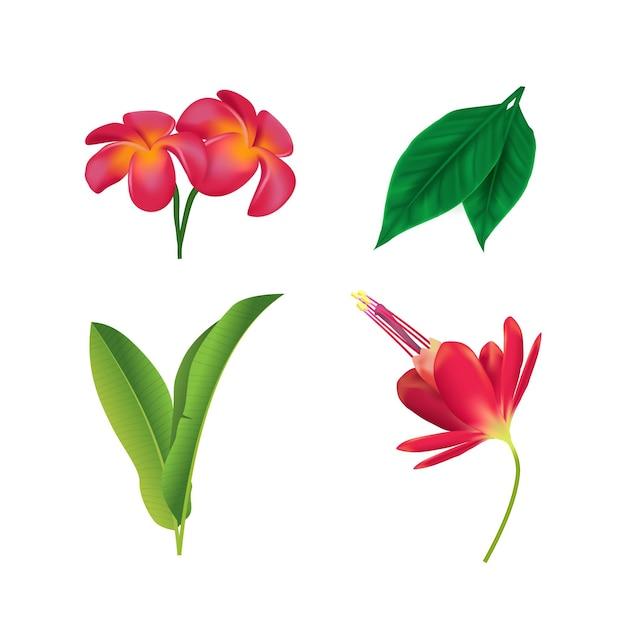 Kolekcja Kwiatów I Liści W Tropikalnym Stylu Darmowych Wektorów