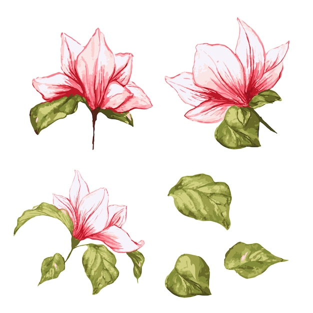 Kolekcja kwiatów magnolii. na białym tle realistyczne liście i kwiaty na akwareli Darmowych Wektorów