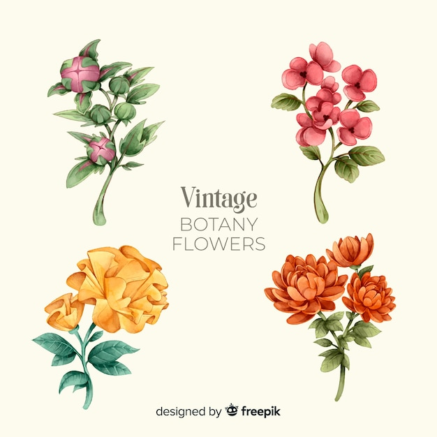 Kolekcja kwiatów w stylu vintage botanika Darmowych Wektorów