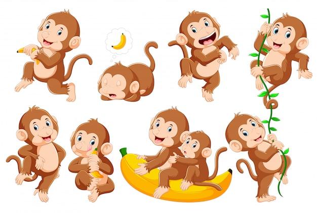 Kolekcja Małpy W Różnych Pozach Premium Wektorów