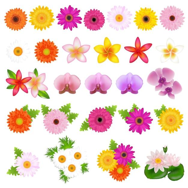 Kolekcja Piękne Kwiaty, Na Białym Tle, Ilustracji Premium Wektorów