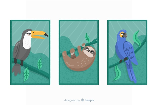Kolekcja Płaskich Kart Dzikich Zwierząt Darmowych Wektorów