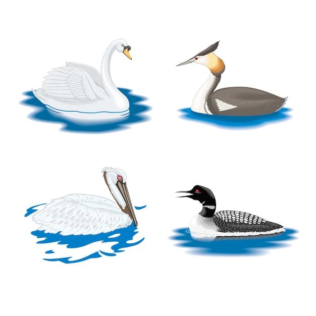 Kolekcja ptactwa wodnego Premium Wektorów