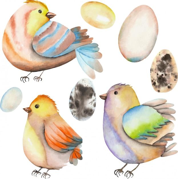 Kolekcja ptaków akwarela i jaj Premium Wektorów