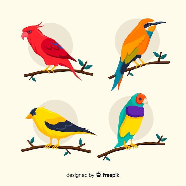 Kolekcja ptaków egzotycznych płaska konstrukcja Darmowych Wektorów