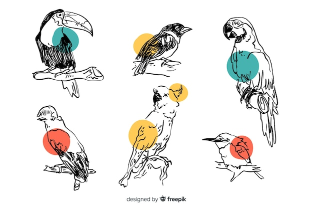 Kolekcja Ręcznie Rysowane Egzotycznych Ptaków Darmowych Wektorów