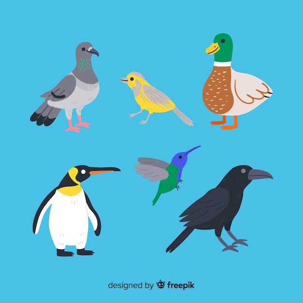 Kolekcja Ręcznie Rysowane Ptaków Darmowych Wektorów