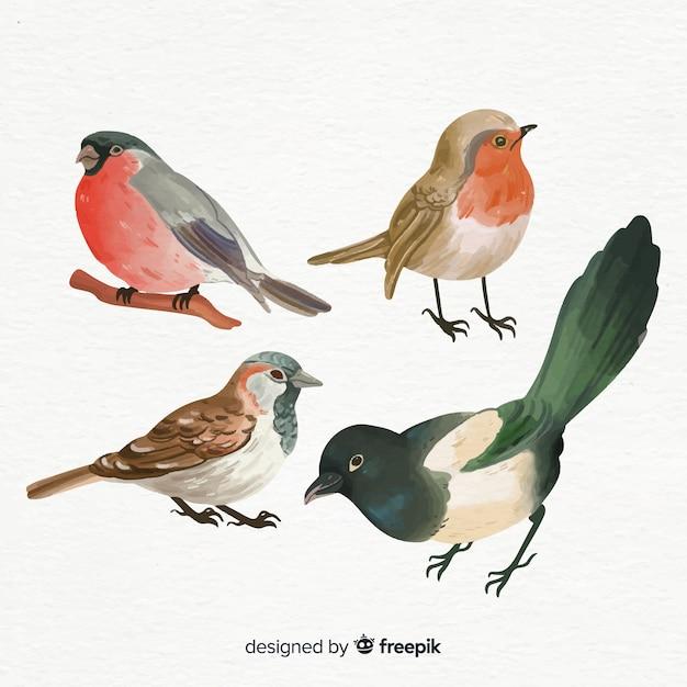 Kolekcja Stylu Akwareli Ptaków Darmowych Wektorów