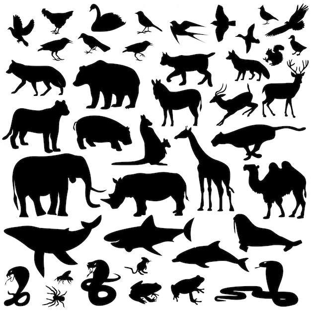 Kolekcja Sylwetki Zwierząt Premium Wektorów