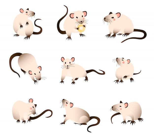 Kolekcja Szczurów Z Kreskówek, Szczury W Różnych Kolorach W Różnych Pozach I Akcjach Premium Wektorów