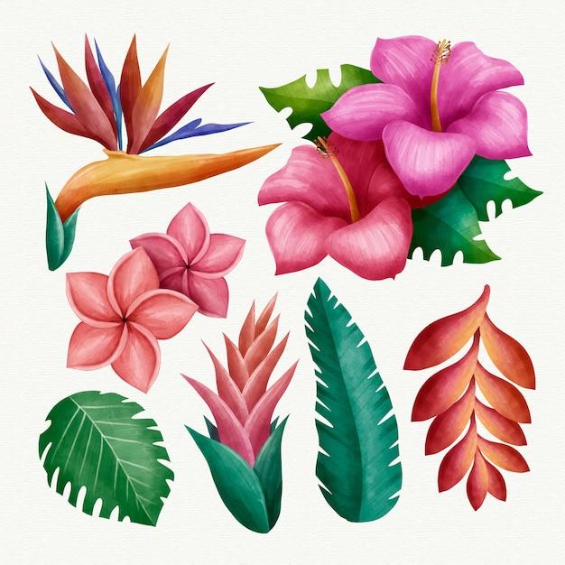 Kolekcja Tropikalnych Kwiatów I Liści Darmowych Wektorów
