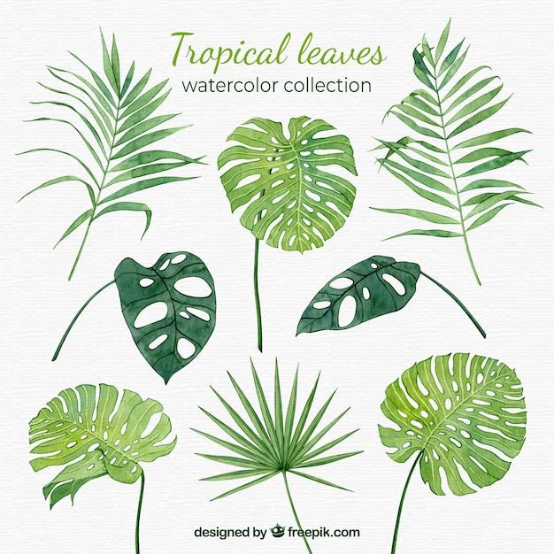 Kolekcja Tropikalnych Liści W Stylu Przypominającym Akwarele Darmowych Wektorów