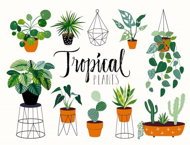 Kolekcja Tropikalnych Roślin Z Różnych Elementów, Pojedyncze I Strony Napis Premium Wektorów