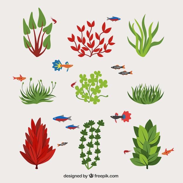 Kolekcja typów glonów i ryb Darmowych Wektorów