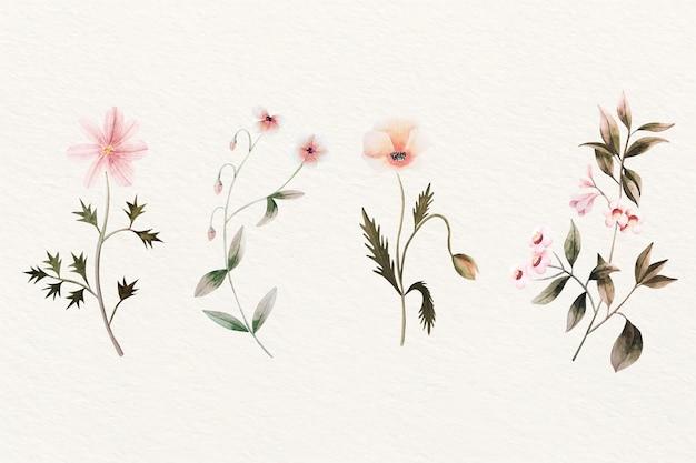 Kolekcja vintage botanika kwiat Darmowych Wektorów