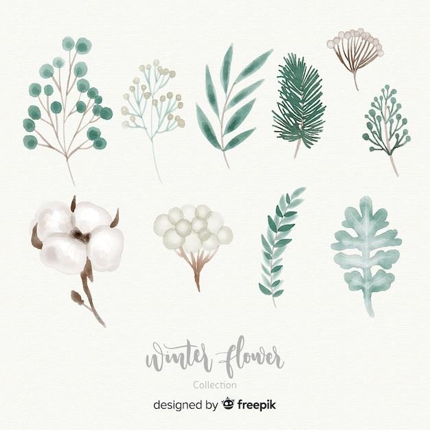 Kolekcja zimowy kwiat akwarela Darmowych Wektorów