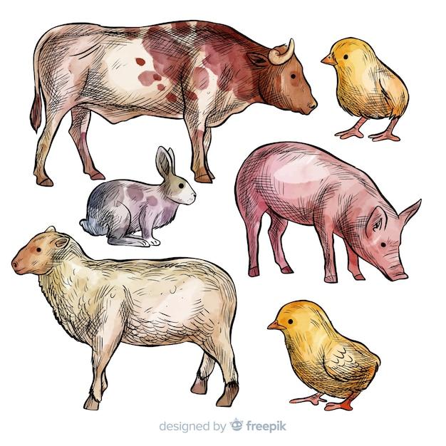 Kolekcja zwierząt gospodarskich Darmowych Wektorów