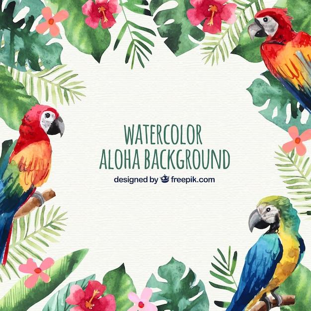 Kolor wody papugi aloha tle Darmowych Wektorów