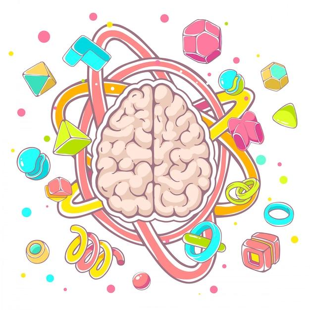 Kolorowa Ilustracja Model Ludzki Mózg Widok Z Góry Na Białym Tle. Premium Wektorów