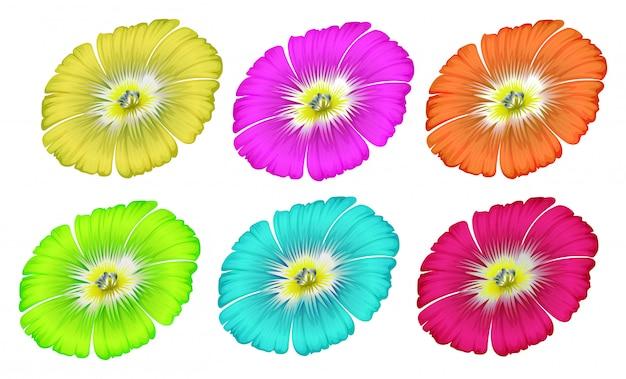 Kolorowe kwiaty Darmowych Wektorów