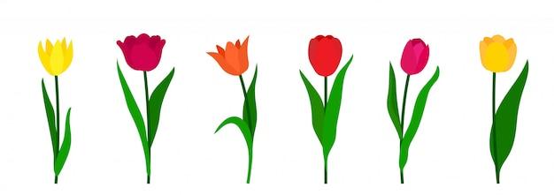 Kolorowi Tulipany Ustawiają Odosobnionego Białego Tło. Premium Wektorów