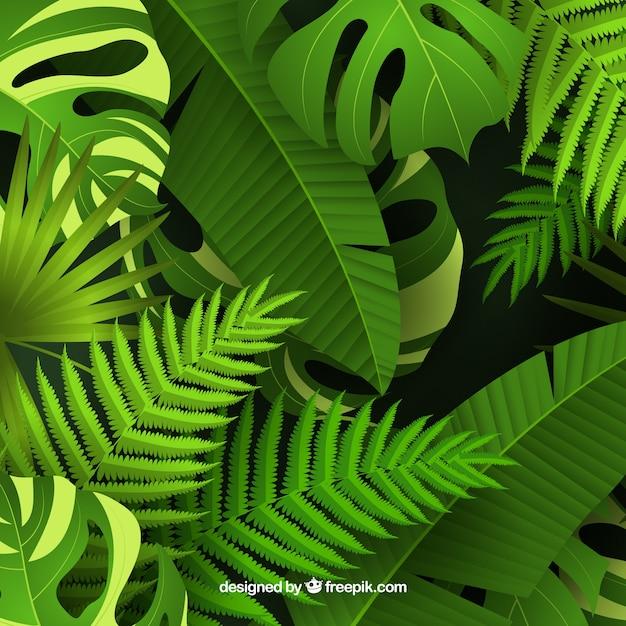 Kolorowy tropikalny tło z realistycznym projektem Darmowych Wektorów