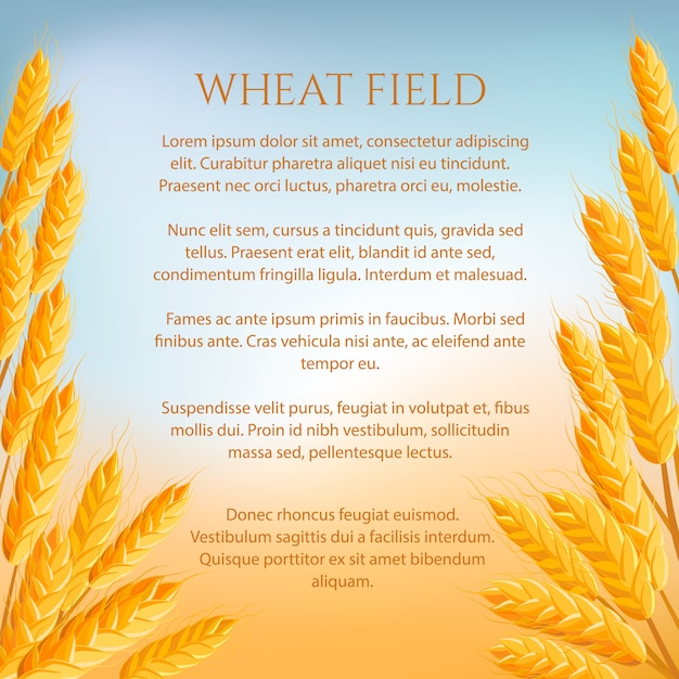 Koncepcja pola pszenicy z miejsca na tekst Premium Wektorów