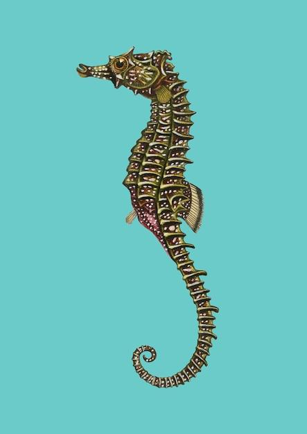 Konik Morski (hippocampus Erectus) Zilustrowany Przez Charlesa Dessalines D'orbigny (1806-1876). Darmowych Wektorów