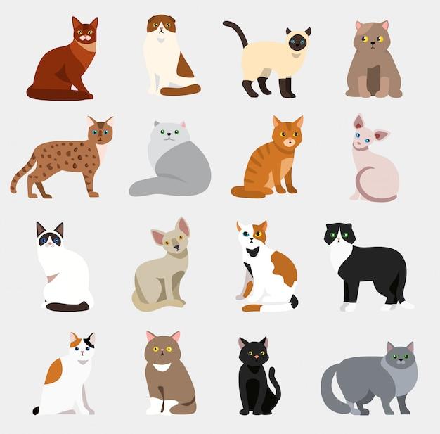 Kot Rasy Słodkie Zwierzę Domowe Zestaw Ilustracji Zwierząt Ikony Kreskówka Różnych Kotów Premium Wektorów
