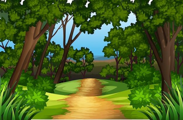 Krajobraz drogi natury Premium Wektorów