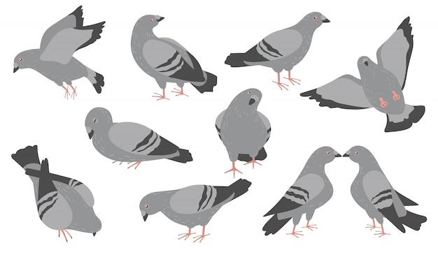 Kreskówka Zestaw Ikon Płaskie Gołębie Darmowych Wektorów