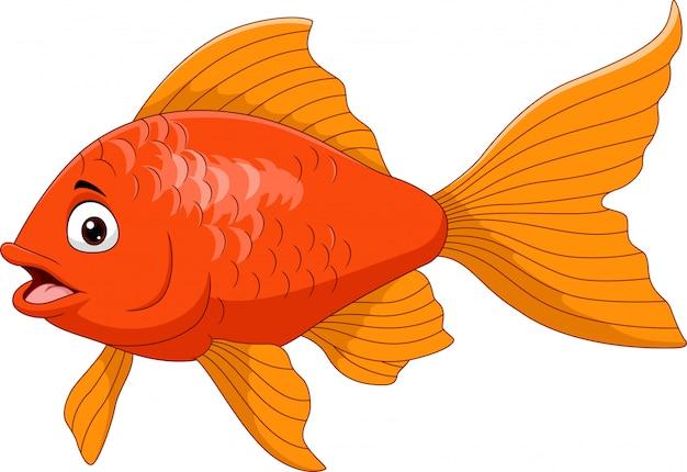 Kreskówki Złota Ryba Odizolowywająca Na Bielu Premium Wektorów