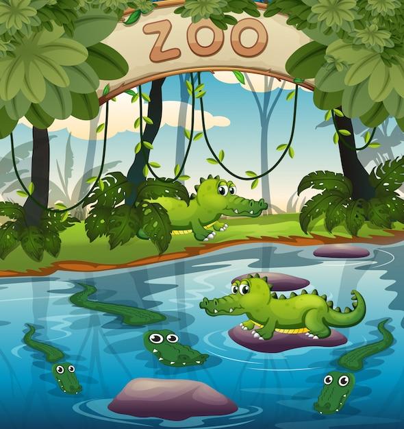 Krokodyl w zoo Premium Wektorów