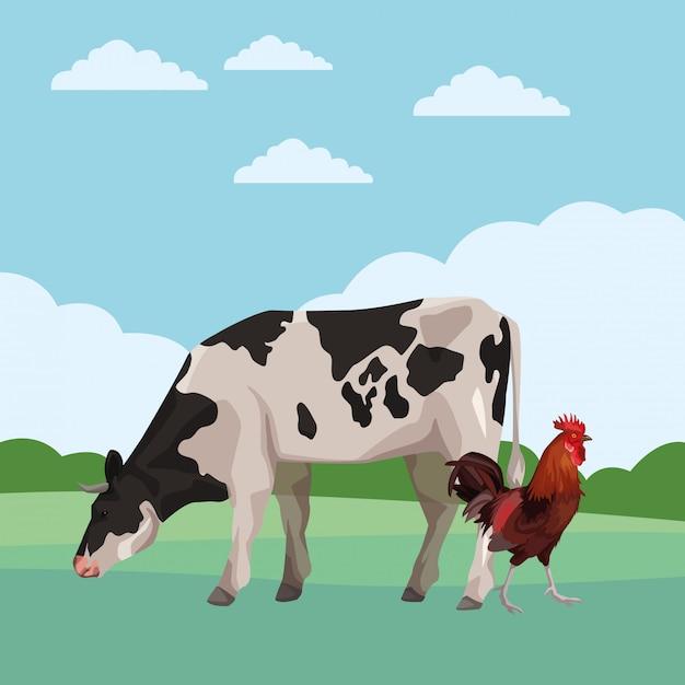Krowa i kogut Premium Wektorów