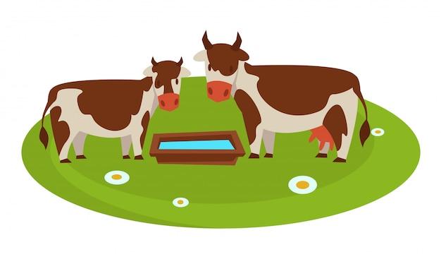 Krowy z drewnianą rynną pełną wody na polu Premium Wektorów