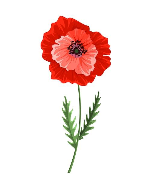 Kwiat Maku. Akwarela Ręcznie Rysowane Mak. Na Białym Tle Symbol Botaniczny Kwitnący Czerwony Kwiat Maku. Kwiatowy Wzór Dla Szablonu Karty Z Pozdrowieniami ślubnymi Wystrój Lub Wakacje. Premium Wektorów