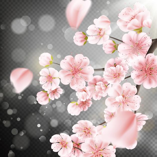 Kwiat Wiśni, Gałąź Kwiatów Sakury Premium Wektorów