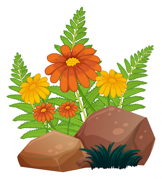 Kwiaty i paprocie Darmowych Wektorów