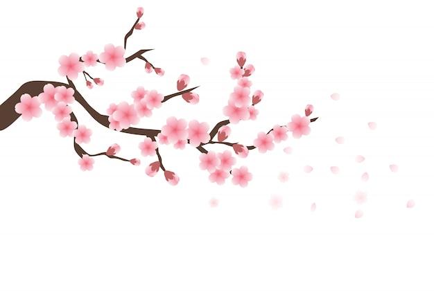 Kwiaty wiśni sakura różowe kwiaty Premium Wektorów
