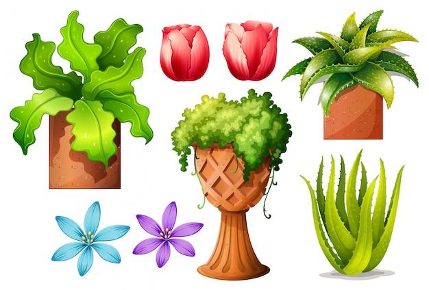 Kwiaty Darmowych Wektorów