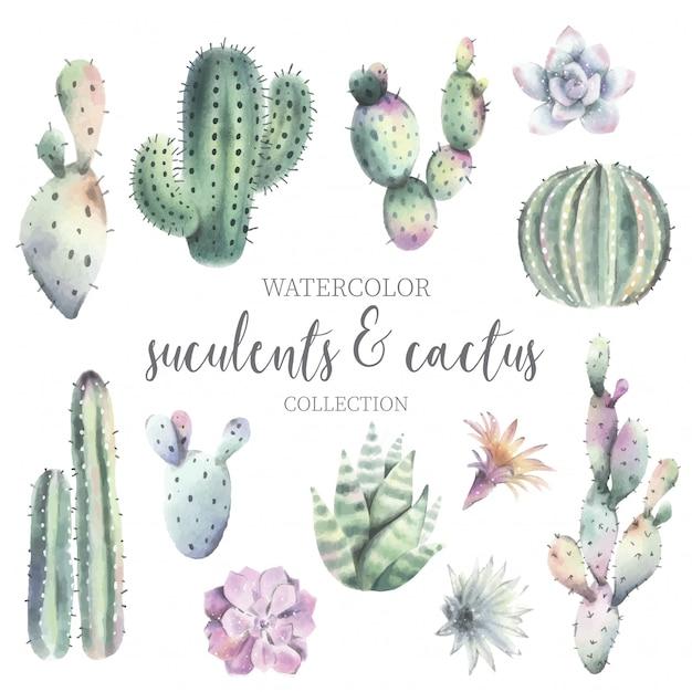 Ładny kaktus akwarela i kolekcję sukulentów Darmowych Wektorów